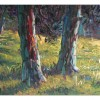 summer - pine tree woods