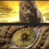 Narnia digital boards 8 10